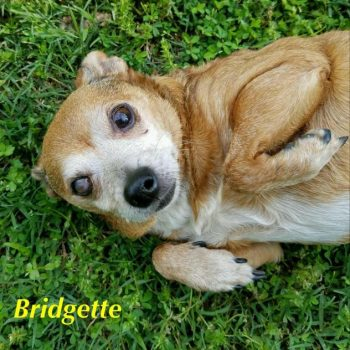 Bridgette-Special Needs-Blind