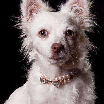 Gidget – Puppy, Special Needs