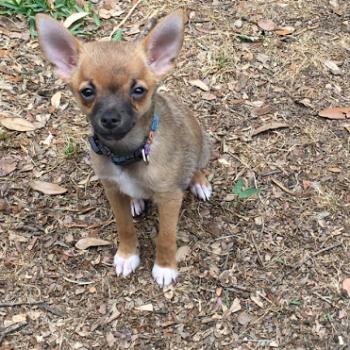 Delta – Puppy