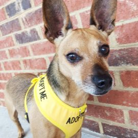 CHARLIE – Experienced Chi Owner
