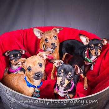 """""""Bottle Baby Puppies"""" – Ready for Adoption!"""