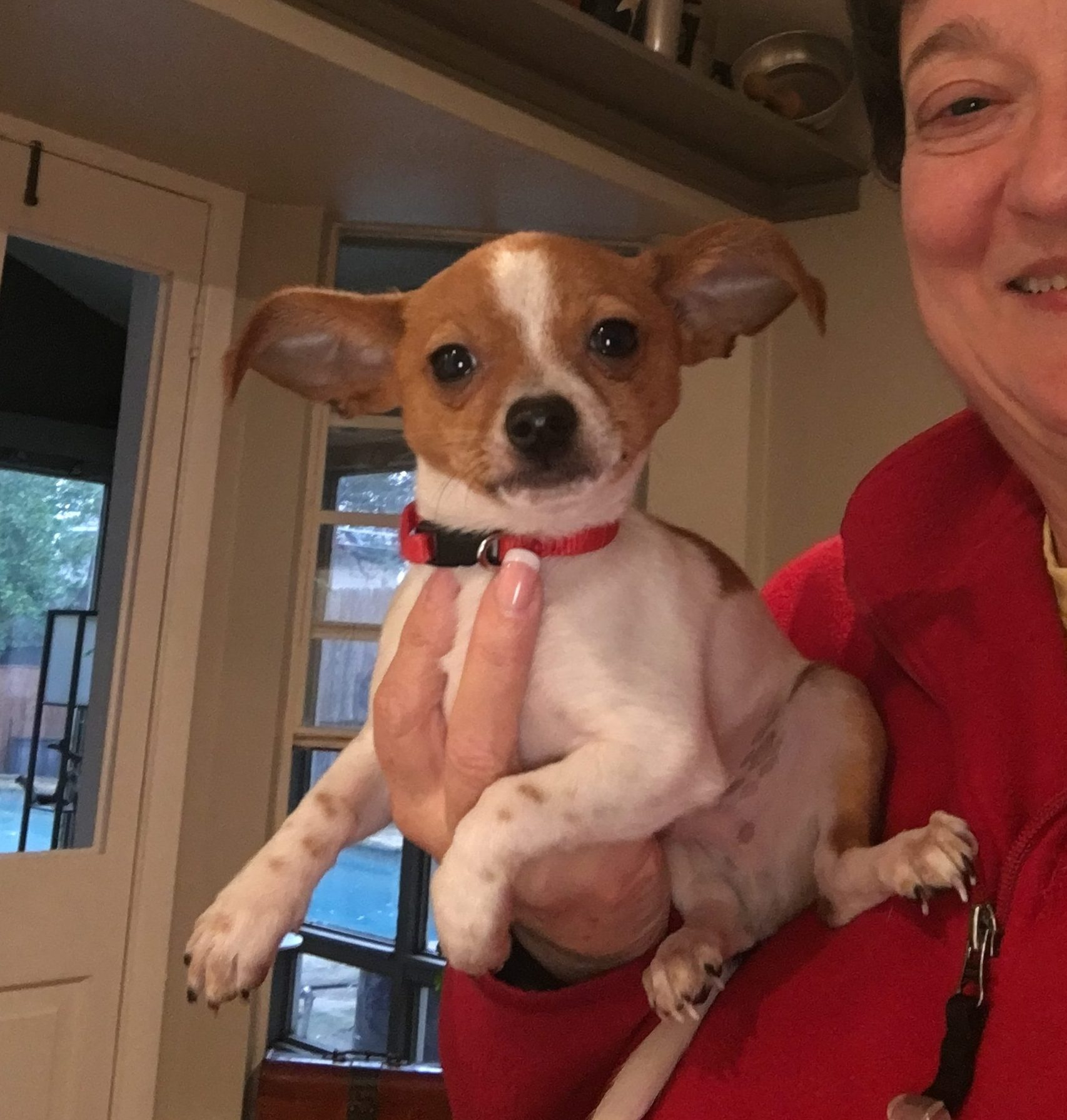 Butch – Puppy – Coming in February