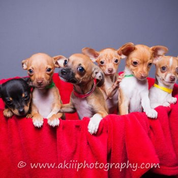 """""""Puppy Palooza"""" coming in February"""