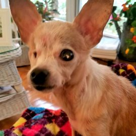 GRACIE – Special Needs – Blind